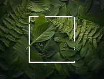 Concepto del jardín botánico de follaje salvaje de la selva Foto de archivo