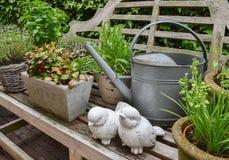 Concepto del jardín con las hierbas y las plantas Imagen de archivo libre de regalías