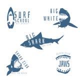 Concepto del logotipo del vector del tiburón para el club de la resaca o de la playa Imagenes de archivo