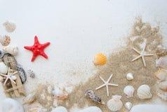 Concepto del mar de la playa del verano Fondo blanco con diversas cáscaras, piedras blancas y arena Sratfish rojos en el centro Fotografía de archivo