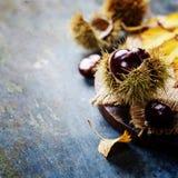 Concepto del otoño con las castañas y las hojas Foto de archivo