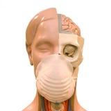 Concepto del peligro del virus de la gripe Imágenes de archivo libres de regalías