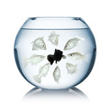 Concepto del racismo de los pescados Imágenes de archivo libres de regalías
