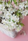 Concepto del saludo de la tarjeta del fondo de Cherry Blossoms Bunch Spring Pink de las flores blancas Fotos de archivo libres de regalías