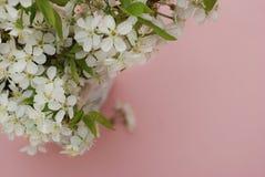 Concepto del saludo de la tarjeta del fondo de Cherry Blossoms Bunch Spring Pink de las flores blancas Fotografía de archivo