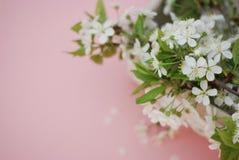Concepto del saludo de la tarjeta del fondo de Cherry Blossoms Bunch Spring Pink de las flores blancas Fotografía de archivo libre de regalías