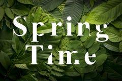 Concepto del tiempo de primavera de follaje verde salvaje de la selva Foto de archivo