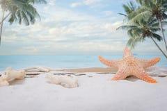 Concepto del verano, cáscaras, estrellas de mar encendido Foto de archivo libre de regalías