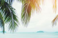 Concepto del verano de la playa de la palmera del coco imagenes de archivo