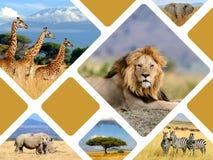 Concepto del viaje con los animales del africano del collage de las fotos Imagenes de archivo
