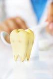 Concepto dental de la higiene Imágenes de archivo libres de regalías