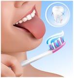 Concepto dental. Dientes que aplican con brocha del cabrito. Imágenes de archivo libres de regalías