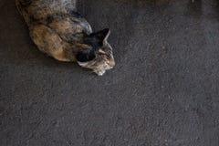 Concepto divertido del gato y del camino concreto Visión superior fotos de archivo
