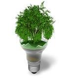 Concepto ecológico: árbol verde en una lámpara quebrada Fotografía de archivo libre de regalías