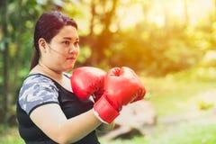 Concepto gordo que lucha combatiente graso del boxeo de la mujer de la muchacha fotografía de archivo libre de regalías
