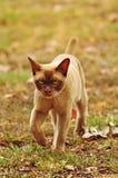 Concepto gruñón del gato - abandoné, yo me estoy yendo Imagen de archivo libre de regalías