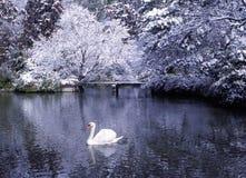Concepto hermoso de la escena del invierno del lago swan Imagenes de archivo