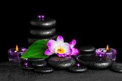 Concepto hermoso del balneario de dendrobium púrpura de la orquídea con el rocío, pyra Imagen de archivo
