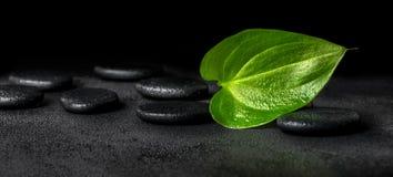 Concepto hermoso del balneario de hoja y de ZENES Stone verdes en la parte posterior del negro Fotos de archivo
