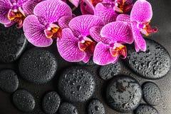 Concepto hermoso del balneario de ramita floreciente de la orquídea violeta pelada Fotografía de archivo
