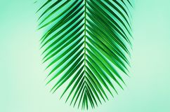Concepto mínimo del verano Hoja del verde de la visión superior en el papel en colores pastel dinámico Endecha plana creativa con fotografía de archivo