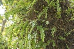 Concepto natural de la flora del jardín de la naturaleza del verde del árbol de la hoja del helecho Foto de archivo libre de regalías