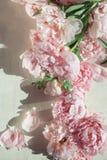 Concepto plano de la endecha con las peonías hermosas en la madera blanca Fotos de archivo
