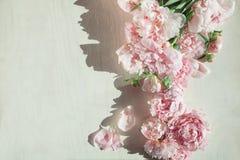 Concepto plano de la endecha con las peonías hermosas en la madera blanca Imágenes de archivo libres de regalías