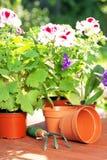 Concepto que cultiva un huerto Establecimiento de las flores en el jardín Foto de archivo libre de regalías
