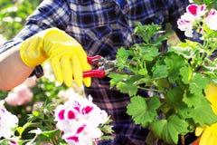Concepto que cultiva un huerto Establecimiento de las flores en el jardín Imagen de archivo libre de regalías