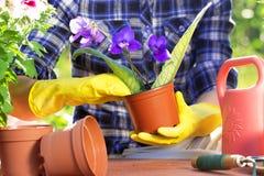 Concepto que cultiva un huerto Establecimiento de las flores en el jardín Fotografía de archivo libre de regalías