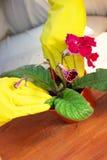 Concepto que cultiva un huerto Establecimiento de las flores en el jardín fotografía de archivo