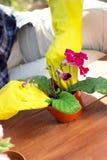 Concepto que cultiva un huerto Establecimiento de las flores en el jardín foto de archivo