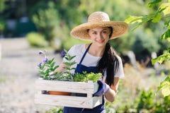Concepto que cultiva un huerto Jardinero hermoso de la mujer joven con las flores en caja de madera imagenes de archivo