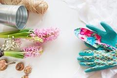 Concepto que cultiva un huerto Todavía vida del jacinto del almácigo, utensilios de jardinería, tijeras, guita, gladiolo de los t Foto de archivo