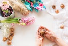 Concepto que cultiva un huerto y taller Todavía vida del jacinto del almácigo, utensilios de jardinería, tijeras, guita, gladiolo Imagen de archivo libre de regalías