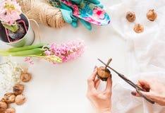 Concepto que cultiva un huerto y taller Todavía vida del jacinto del almácigo, utensilios de jardinería, tijeras, guita, gladiolo Fotos de archivo