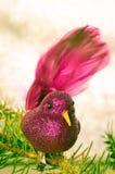 Concepto rosado del pájaro de la Navidad Imagen de archivo