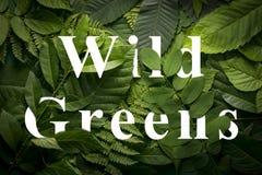 Concepto salvaje de los verdes de follaje verde salvaje de la selva Imagen de archivo