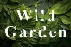 Concepto salvaje del jardín de follaje verde salvaje de la selva Imágenes de archivo libres de regalías