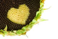Concepto sano del amor del girasol Foto de archivo