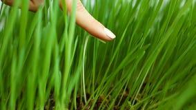 Concepto social de la discriminación: Cuchilla blanca entre la hierba verde (que quita malas hierbas indeseadas) La supresión de  metrajes