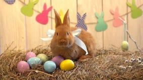 Concepto tradicional del símbolo del conejo de la celebración mullida de pascua en el heno que miente cerca de los huevos almacen de video