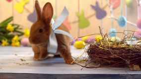 Concepto tradicional del símbolo del conejo de la celebración mullida de pascua que mira la cámara almacen de video