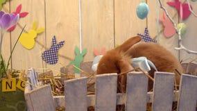 Concepto tradicional del símbolo del conejo de la celebración mullida de pascua que oculta detrás de las flores almacen de video