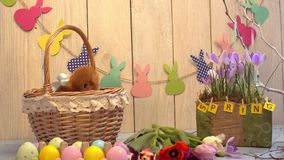 Concepto tradicional del símbolo del conejo de la celebración mullida de pascua que oculta en cesta metrajes