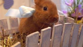 Concepto tradicional del símbolo del conejo de la celebración mullida de pascua que se sienta detrás de la cerca almacen de video
