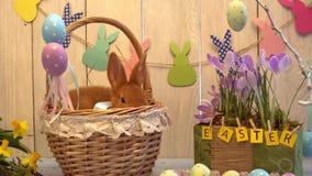 Concepto tradicional del símbolo del conejo de la celebración mullida de pascua slwwping en cesta almacen de metraje de vídeo