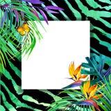 Concepto tropical del verano para el diseño planta de la acuarela Fotos de archivo