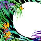 Concepto tropical del verano para el diseño planta de la acuarela Imagenes de archivo